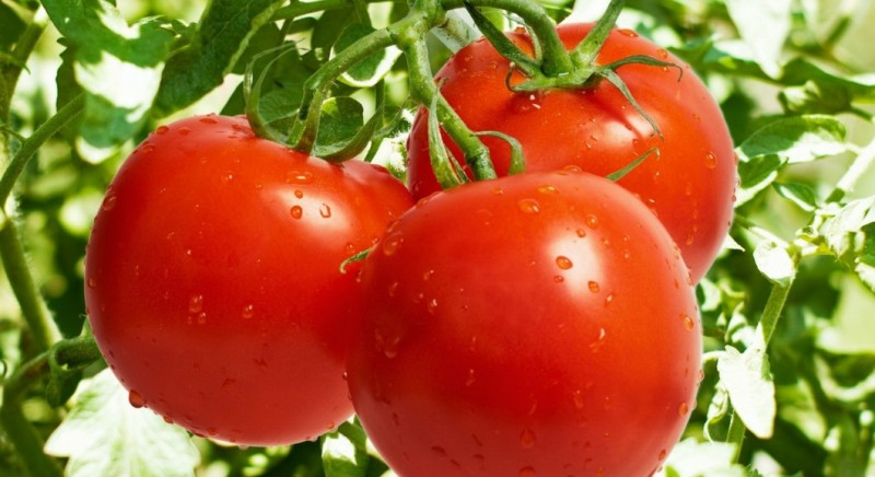 health benefits of tomatoes and tomato paste