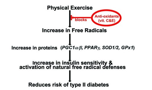 Are antioxidant supplements necessary for individuals who exercise regularly?