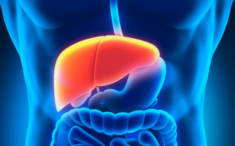 Importance of liver in our body