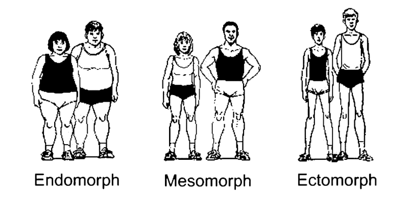 Body types and characteristics