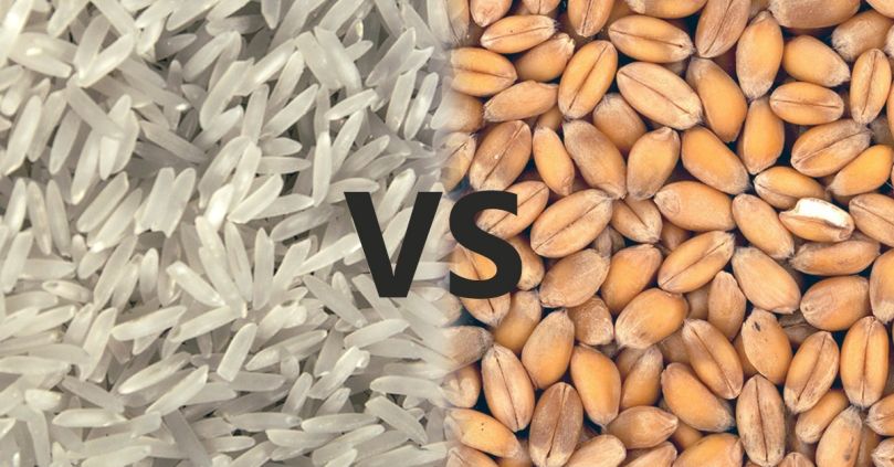 Which is the better staple - Rice or Wheat?