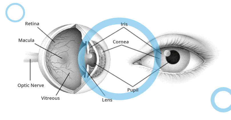 parts-of-the-eye