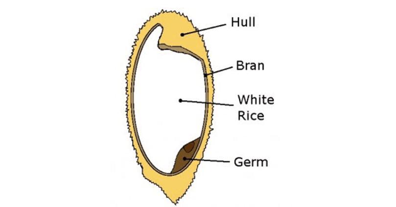 grain-structure