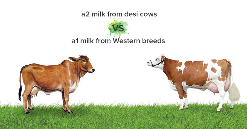 a2 versus a1 milk.png