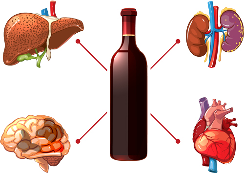 EFFECTS OF ALCOHOL ON YOUR BODY